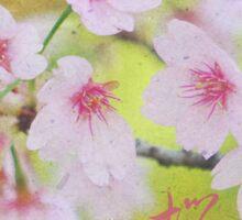 Pale Pink Sakura Cherry Blossoms Vintage Paper Textures Sticker