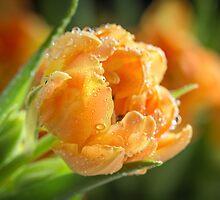Spring Forth by Lynn Gedeon