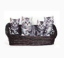 Four charming gray striped kitten British cat in a basket Baby Tee