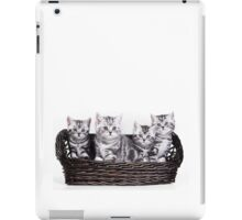 Four charming gray striped kitten British cat in a basket iPad Case/Skin