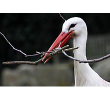 Sticks for the Nest Photographic Print
