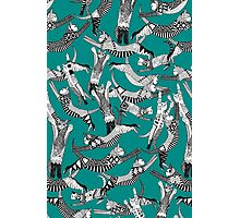 cat party teal blue Photographic Print
