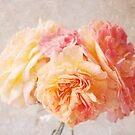 Textured Pastel Rose by Nicola  Pearson