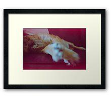 'Dog Paws'  Framed Print