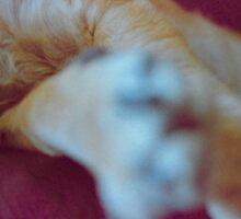 'Dog Paws'  Sticker