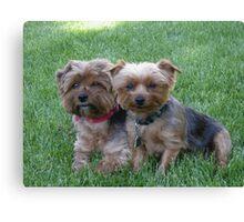 Puppies! Canvas Print