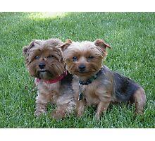 Puppies! Photographic Print