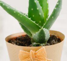 Mini succulent cactus Sticker
