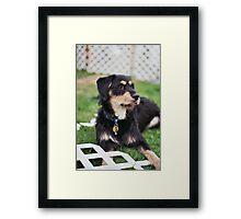 'Dexter Backyard' Framed Print
