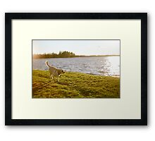 'Molly on the shore'  Framed Print