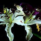 NOT SO FRESH FLOWERS by Paul Quixote Alleyne