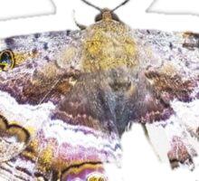 Kendrick Lamar Butterfly Sticker