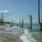Stump Pass Beach  by John  Kapusta