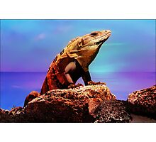 I-Guana Oceanview Photographic Print