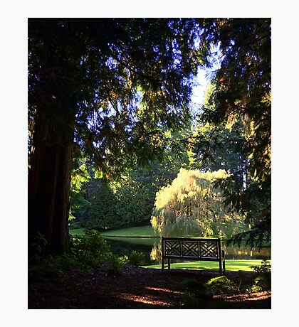 Willow & Bench Photographic Print