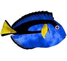 Happy Space Blue Tang Reef Fish Photographic Print