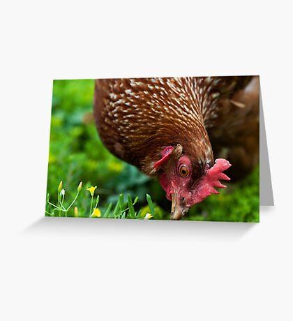 Neighborhood Chicken Greeting Card