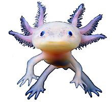 Axoltyl - The Lungless Salamander Photographic Print