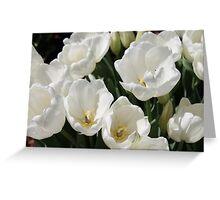 Snow White Tulips Greeting Card