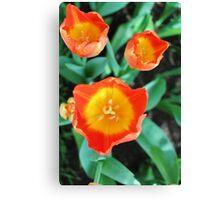 Yellow & Orange Tulip Canvas Print