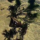 Ah the seaside by bertie01