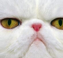 White Persian Cat Sticker