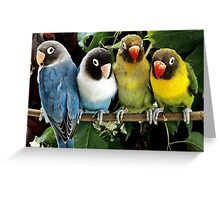 Parrots/Birds Greeting Card