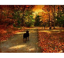 A lab in Fall Photographic Print