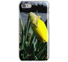 Flowers - first daffodil (2016) iPhone Case/Skin