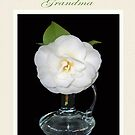 Single white camellia in glass vase for grandmother by Mary Taylor