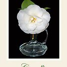 White camellia in glass vase. by Mary Taylor