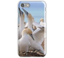 Gannets iPhone Case/Skin