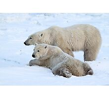 Polar Bear Mates Photographic Print