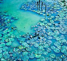 Water Lily Pond - Sukhothai Ruins by Nixz Kerr