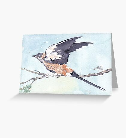 Greater-striped Swallow - (Cecropis cucullata) Greeting Card