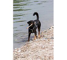 dog play at lakedog play at lake Photographic Print