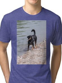 dog play at lakedog play at lake Tri-blend T-Shirt