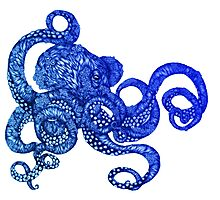 Ombre Octopus Photographic Print