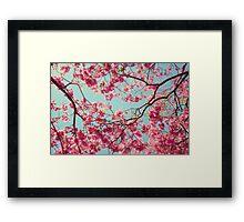 spring sky Framed Print
