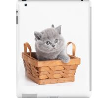 Gray cute fluffy British kitten iPad Case/Skin