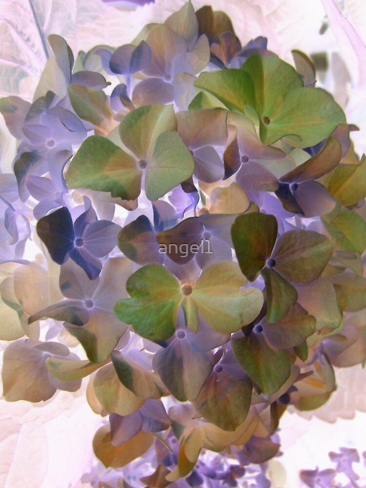 Hydrangea inversion   by ©The Creative  Minds