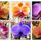 Orchid varieties by ©The Creative  Minds