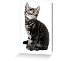 Gray striped cute kitten with big eyes Greeting Card
