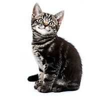 Gray striped cute kitten with big eyes Photographic Print