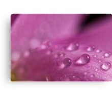 Droplet of water on a pink petal Canvas Print