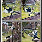 Feeding magpie collage by missmoneypenny