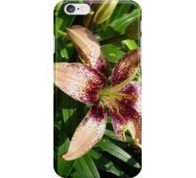 Salmon Pink lily iPhone Case/Skin