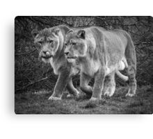Big Cats On The Hunt Canvas Print