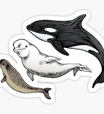 Three ocean friends Sticker