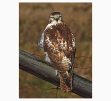 Red-tailed Hawk on fence Kids Tee